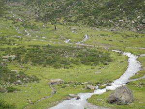 Grasende Wildpferde und Bergbäche