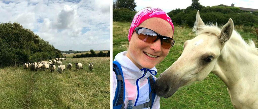 Anglesey Coastal Path: Tierische Begegnungen