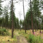 Anglesey Coastal Path: Newborough Forest