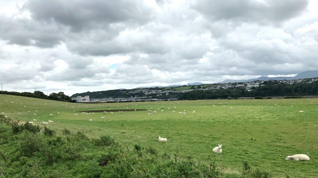 Anglesey Coastal Path: Schafweide