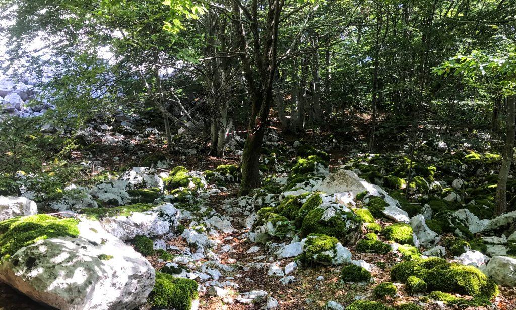 Steiniger Downhill beim Ucka Trail