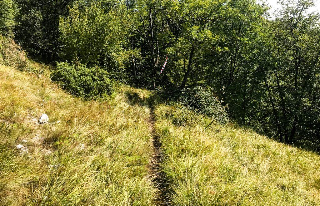 Grasweg beim Ucka Trail