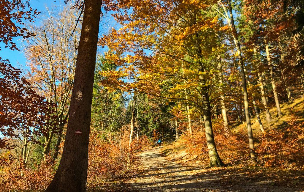 Kini Trail durch den Herbstwald