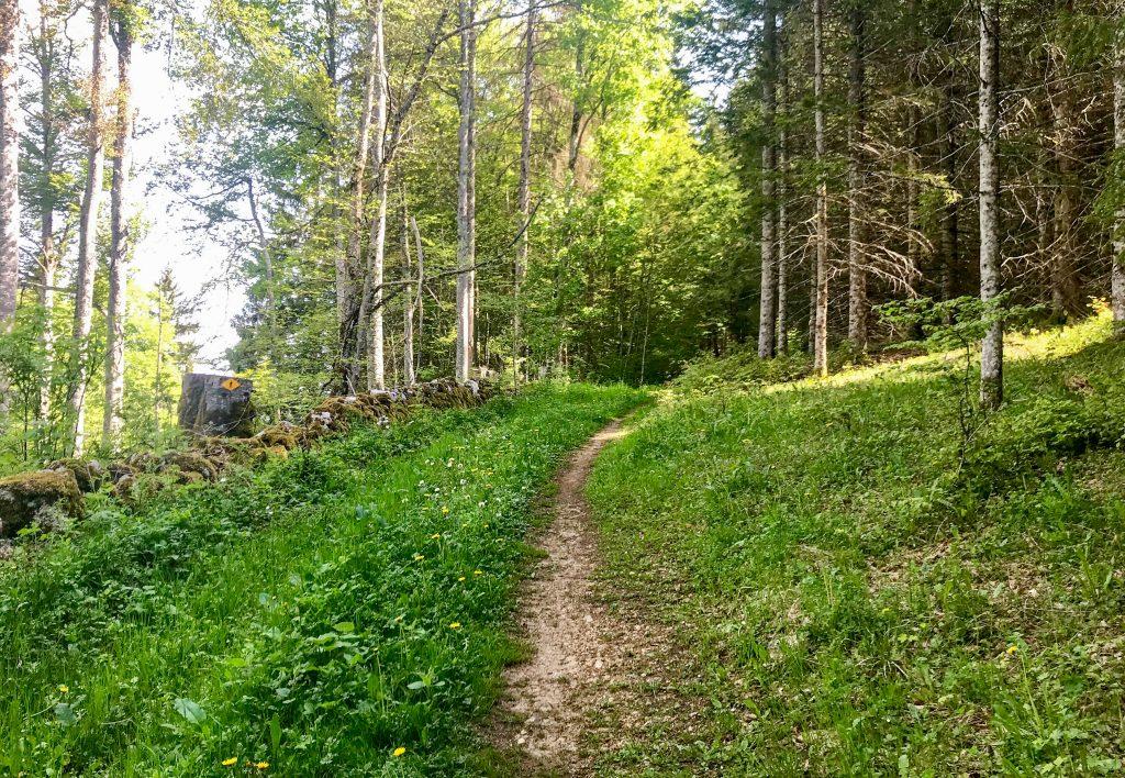 Trail Vallée de Joux