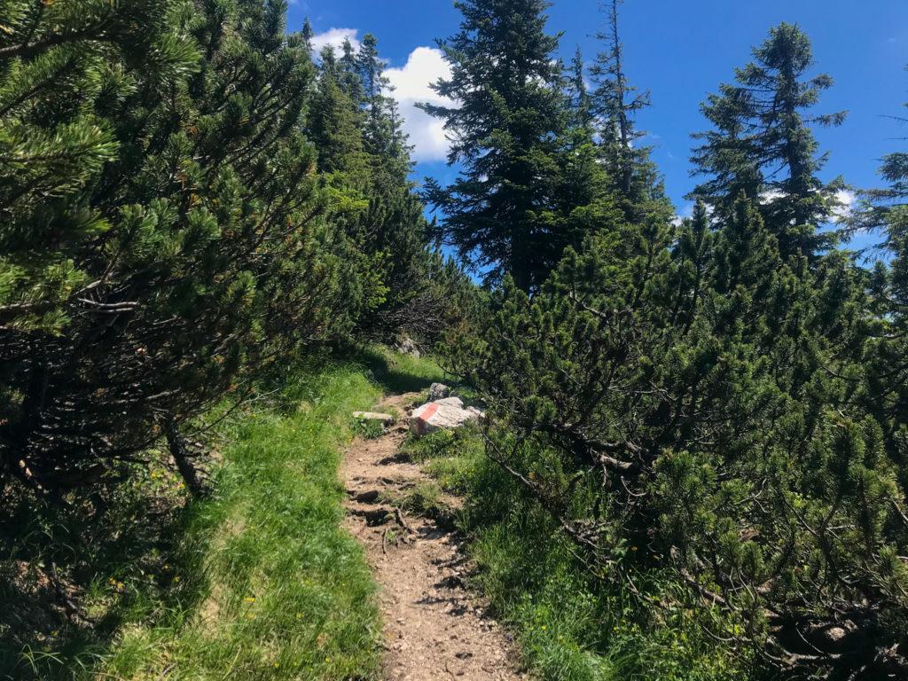 Trail zwischen Hochschlegel und Karkopf